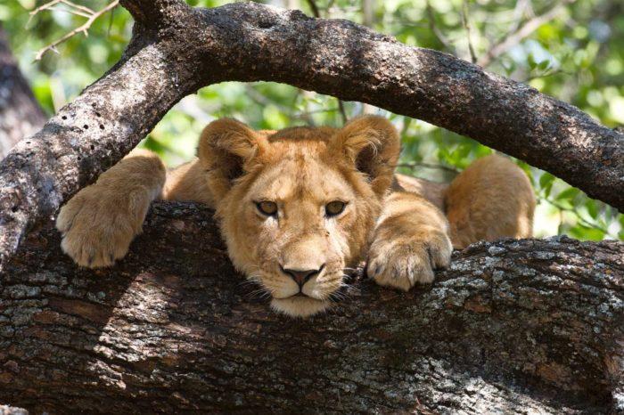 3 Days | 2Nights short & sweet safari