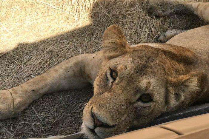 10 Days Wildlife & Cultural Safaris